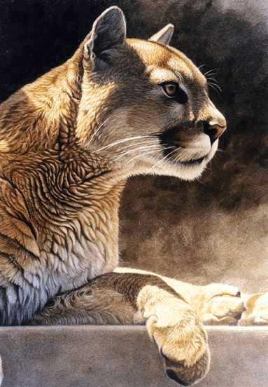 cleland-hura动物绘画作品