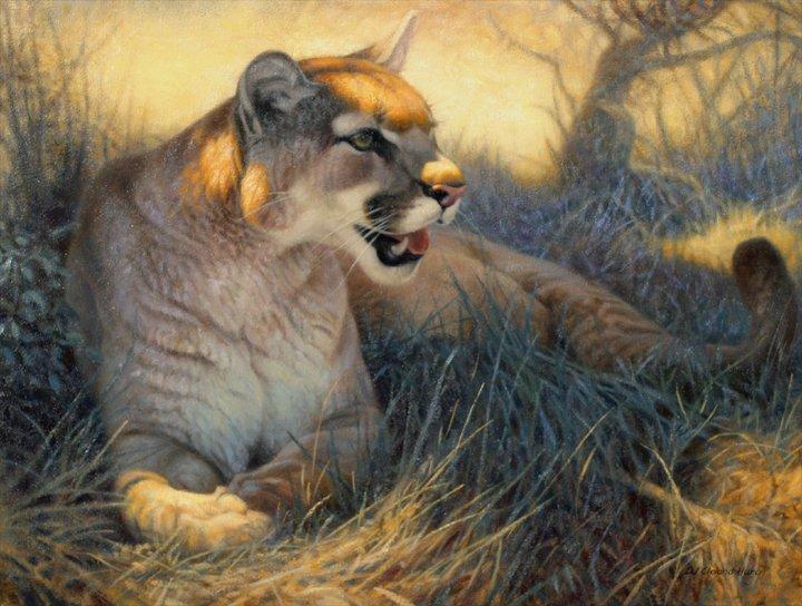 cleland-hura动物绘画作品(2)