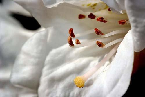 25张美丽的花卉摄影欣赏