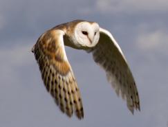 漂亮的鸟类飞行摄影