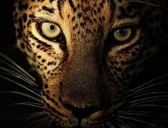 野生动物摄影师MariusCoetzee的神奇探险