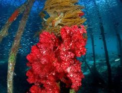 2010年世界最佳水下摄影作品欣赏