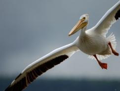 KlausNigge野生动物摄影