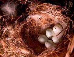 小鸟的家:鸟巢摄影作品
