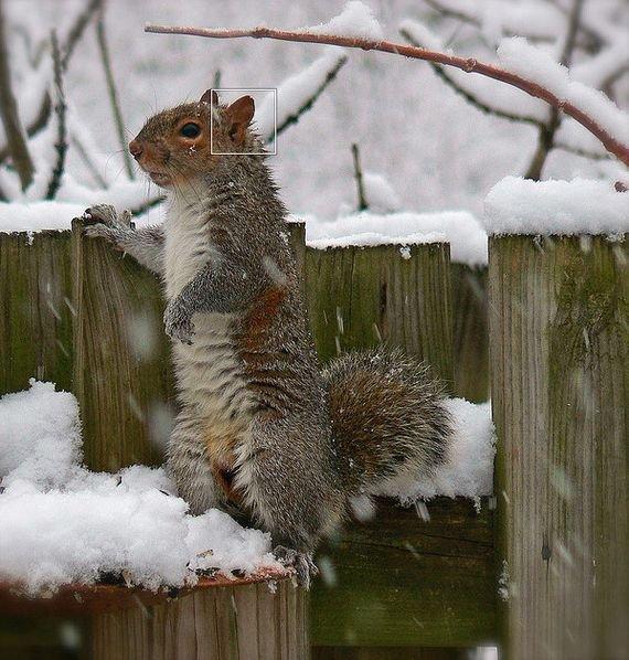摄影欣赏:雪地里的野生动物(2)-设计之家