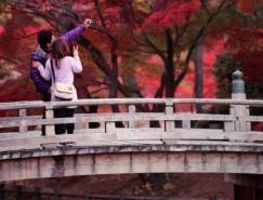 日本yoshi美丽的自然风光摄影