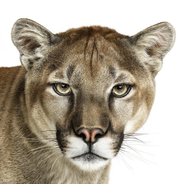 自然博物馆中与动物大小相同的展品和置身雪地的动物