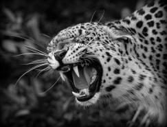 40张动物黑白摄影作品