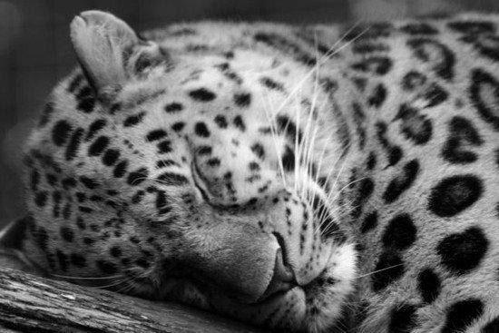 40张动物黑白摄影作品(2)