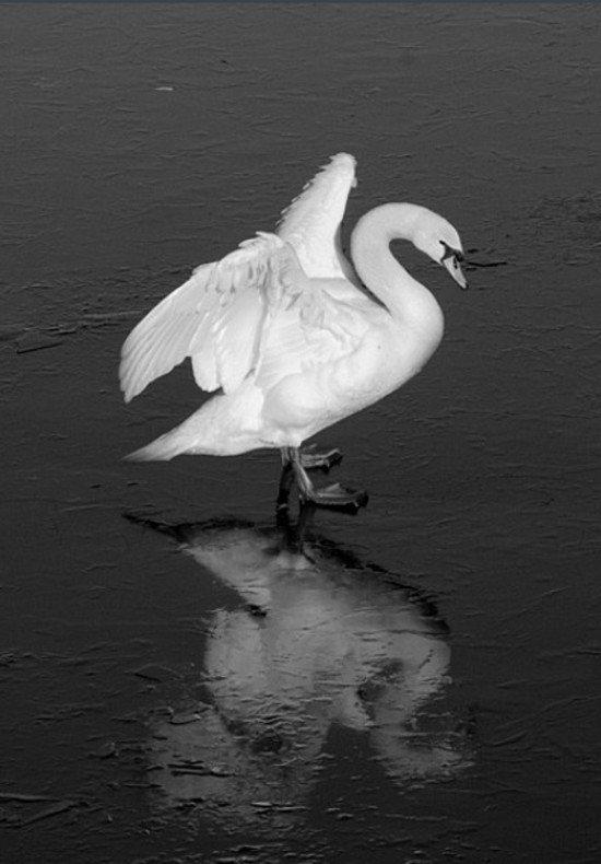 40张动物黑白摄影作品(3)