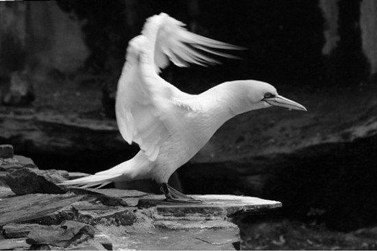 40张动物黑白摄影作品(4)