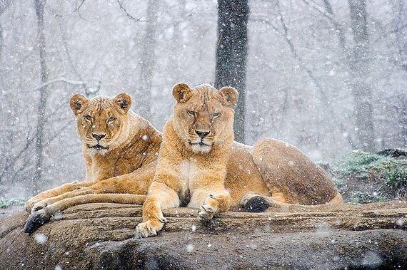 50个精彩动物摄影作品(2)