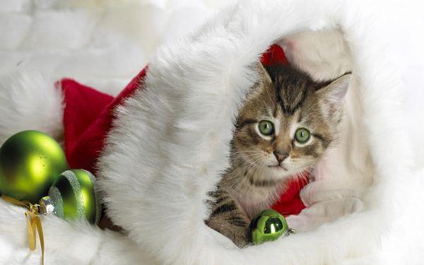 圣誕節圖片38
