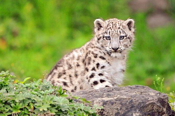 The Cute Kailash