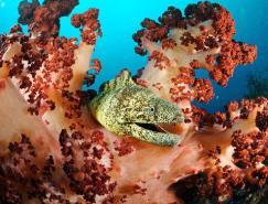摄影欣赏:灿烂的海底世界