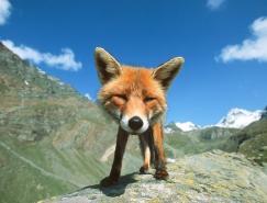 StefanoUnterthiner动物摄影:和动物面对面