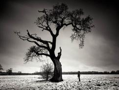 100张树的摄影图片欣赏