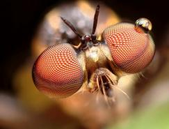 GustavoMazzarollo昆虫微距摄影作品