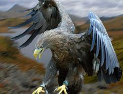 动物摄影欣赏:鹰