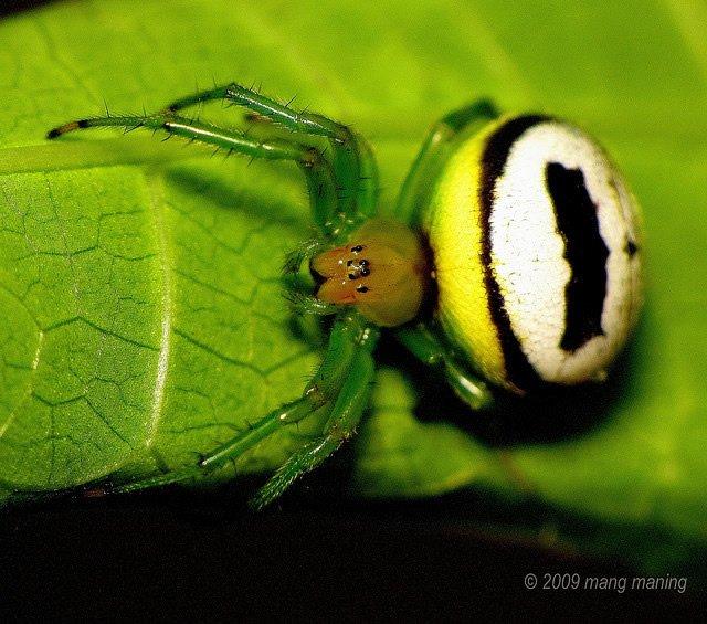 蜘蛛微距摄影作品