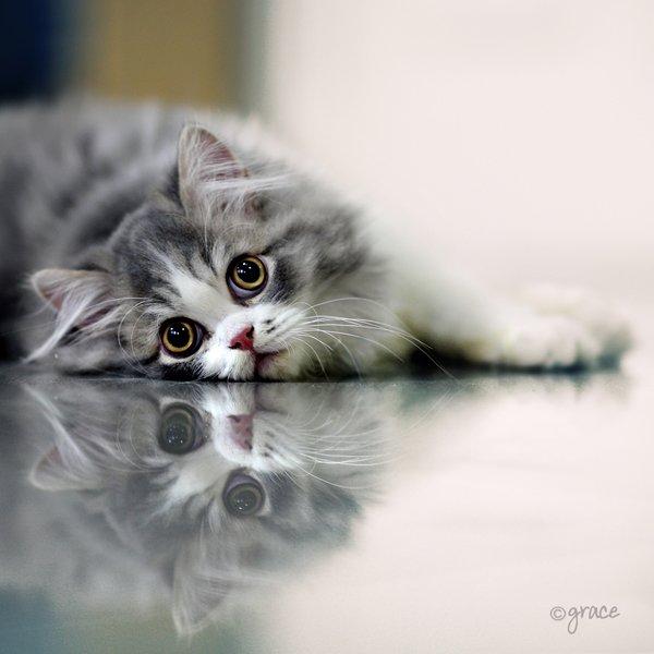 60张可爱的猫咪摄影作品