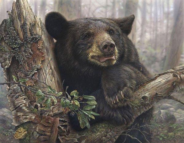 逼真的野生动物绘画作品(2)