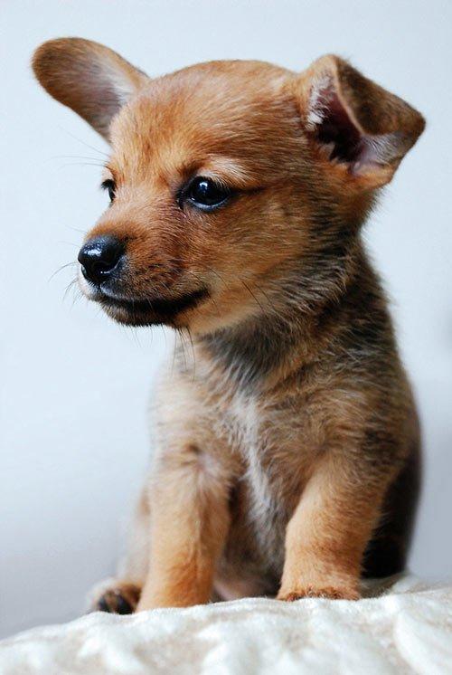 动物摄影:可爱的小狗