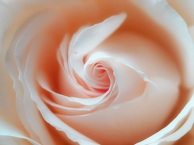 摄影欣赏:70张美丽梦幻的花
