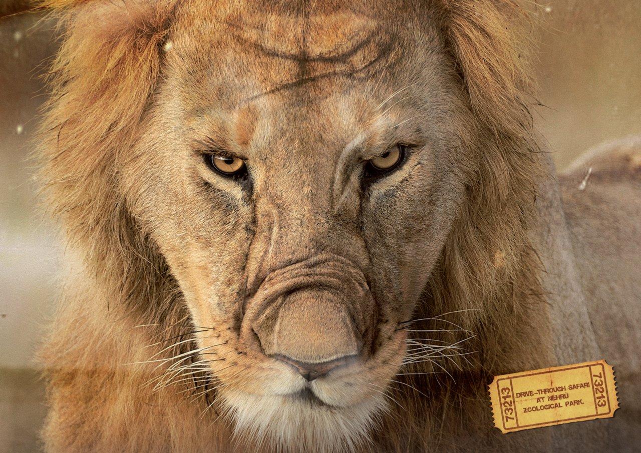 与动物亲密接触:尼赫鲁野生动物园广告