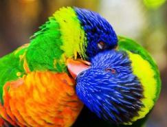颜色的魔力:鸟类摄影澳门金沙网址