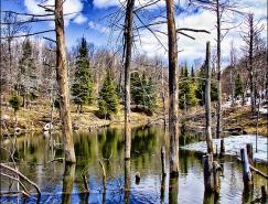 呼吸自由的空气:迷人的森林摄影作品