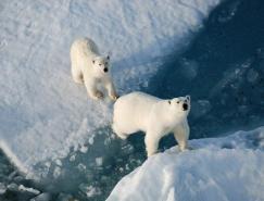 冰冻之美:南极和北极摄影作品