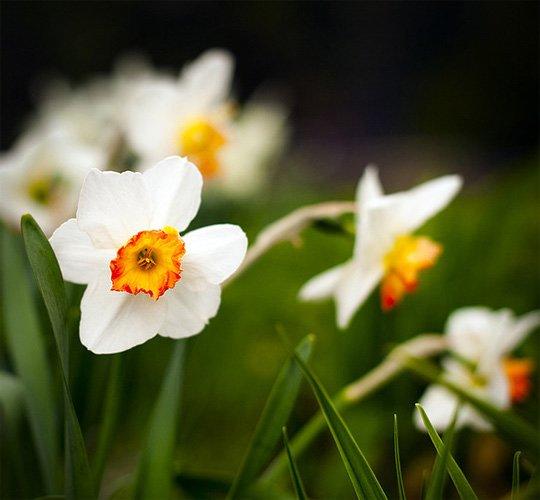 61张美丽的春天摄影作品