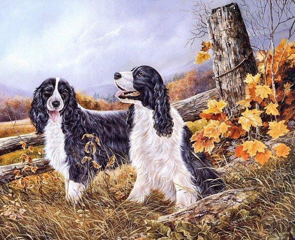 可爱的小动物 笔下/Shirley Deaville画笔下可爱的小狗