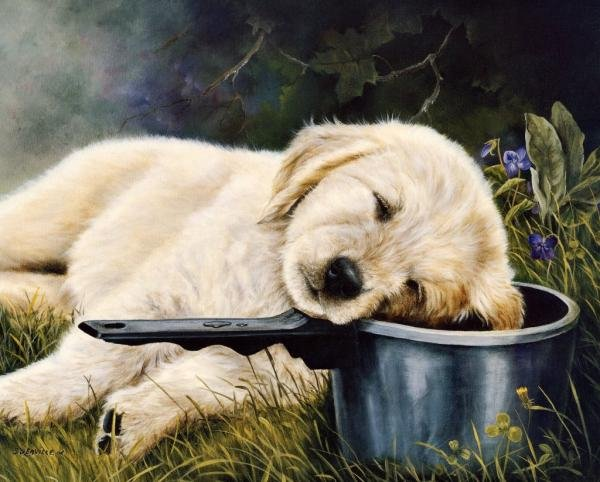 欣赏 可爱 可爱的小动物/Shirley Deaville画笔下可爱的小狗