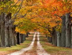 摄影欣赏:30张如画的秋天景色