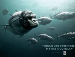 WWF:停止捕杀蓝鳍金枪鱼