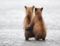 """俄羅斯GoldenTurtle""""野生動物攝影比賽獲獎作品"""