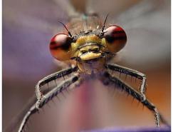 33张昆虫摄影作品欣赏