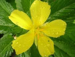 摄影欣赏:绿色和黄色结合的美妙摄影作品