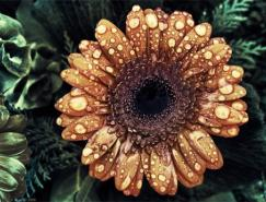 美丽的花卉图片摄影