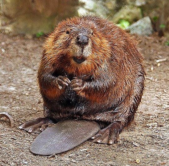 动物摄影:水生哺乳动物(6)