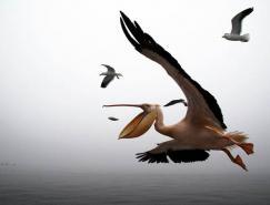 动物摄影欣赏:美丽的鸟