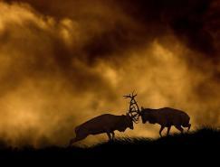野生动物和风景的完美结合:BenHall摄影作品