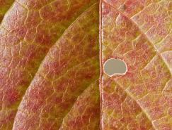 微距摄影:美丽的树叶和树木