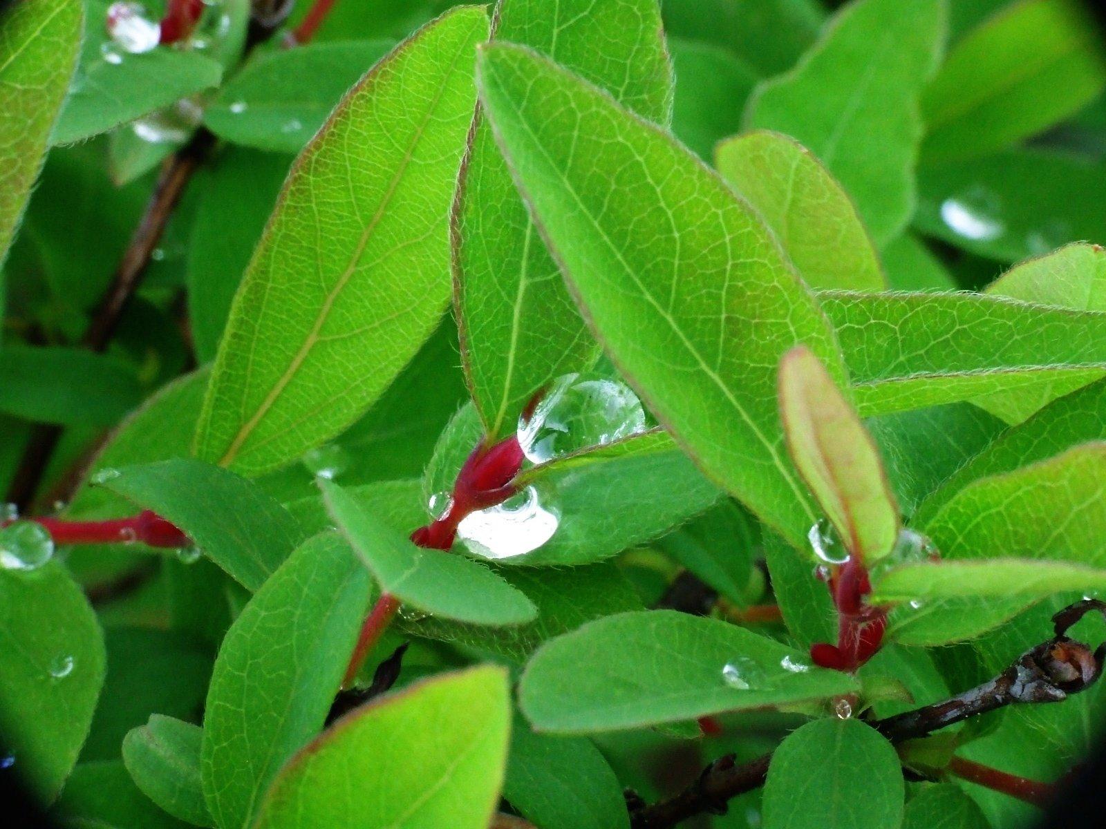微距摄影:美丽的树叶和树木(5)