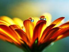 摄影欣赏:美丽的水滴
