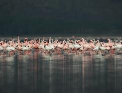 28张完美的动物摄影作品欣赏