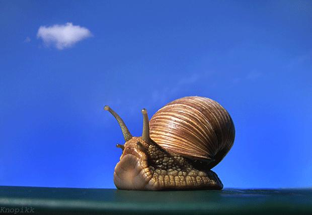 28张完美的动物摄影作品欣赏(2)