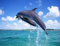 动物摄影欣赏:海豚